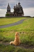 Sur le fond des églises en bois du chat — Photo