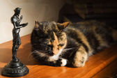 Cat and a statuette of Don Quixote — Stock Photo