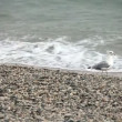 Stock Video: Wondering seagull on rocky stones beach