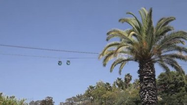 Cableway and palm tree — Stock Video