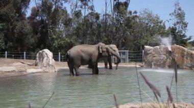 Elephants in water in the zoo — Stock Video