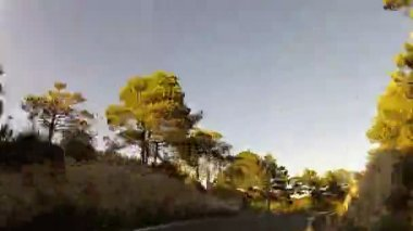 Forest road POV from car moving at sunset, timelapse — Stock Video