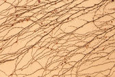 Vine on the wall pattern — Stock Photo