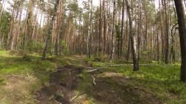 Walking POV in the forest, wide angle — Stock Video