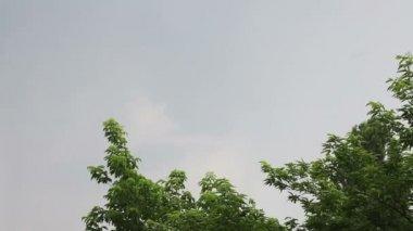 White lightning strike during summer storm — Stock Video