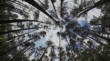 Timelapse in the summer forest with tree trunk and cloudy sky — Stock Video