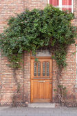 Closed door with vines on the street — Stock Photo