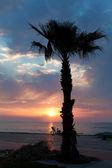 Seafront of Batumi with palm tree silhouette — Zdjęcie stockowe