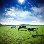 Pasture — Stock Photo #12789625