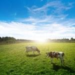 Pasture — Stock Photo #16902659