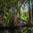 Stock Photo: Jungle forest