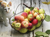 Apple basket and cat — Stock Photo