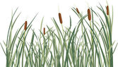 Reed and green grass background — Stock Vector