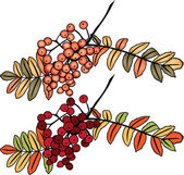 Autumn rowan berry branch — Stock Vector