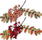 Autumn rowan berry branch — Stock Vector