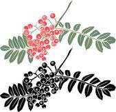 Rowan berry branch stencil — Stock Vector