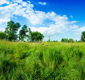 Grass and clouds on blue sky — Stockfoto