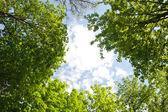 Frame from green leaves across sky — Stock Photo