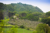 View on mediterranean vineyard — Stock Photo