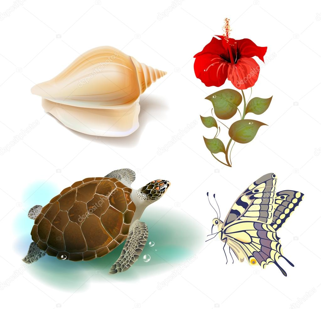 Set of realistic tropical icons  Stock Vector #12103284