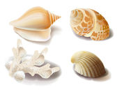 Set of seashells and coral — Stock Vector