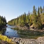 Fast river among an wood — Photo #12582257
