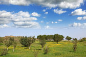 The clouds and blossoming rural fields — Stock Photo