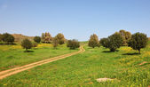The rural footpath crosses a meadow — Stock Photo
