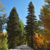 Nice trail. — Stock Photo