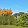 Stock Photo: Bright high reeds and shrubs