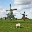 White lambs and windmills. — Stock Photo #13172365