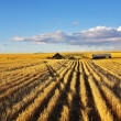 Solar midday on fields of Montana — Stock Photo #13719004