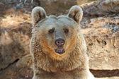 Grande urso posando para visitorsi em tel aviv — Foto Stock