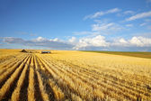 The autumn midday on fields of Montana — Stock Photo