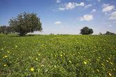Mittag auf blühenden hügeln von heiße küste des meeres - gras, blumen — Stockfoto