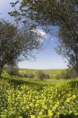 Le domaine florissant de printemps avec les marguerites et les arbres — Photo