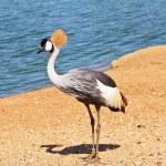 l'oiseau gracieux au plumage magnifique sur la tête — Photo