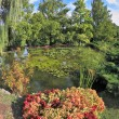 A wonderful pond with lilies - 图库照片