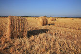 Field after harvest. Sunset — Stock Photo