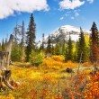 Brilliant colors of autumn — Stockfoto