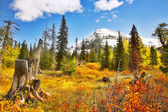 Brilliant colors of autumn — Stock Photo