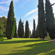 The shadows of the cypresses slender fall — Stock Photo