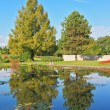 Slender trees are reflected in the pond - Stock Photo