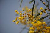 Okouzlující květy na dim pozadí — Stock fotografie