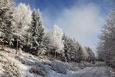 дорога в снегу — Стоковое фото