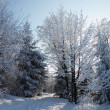 The winter forest — Stock Photo #15856701