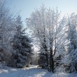 The winter forest — Stock Photo