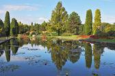 The pond reflects coastal cypresses — Stock Photo