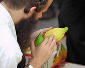 An orthodox Jew picks citrus before the Sukkot — Stock Photo