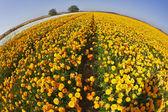 Bright spring flower fields. — Stock Photo